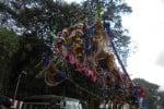 பழநியில் பக்தர்கள் எடுத்த பறவை காவடி