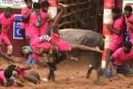 கோவையில் நடந்த ஜல்லிக்கட்டு களமிறங்கிய 750 வீரர்கள்