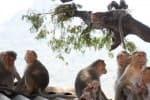'கொரோனா' முன்னெச்சரிக்கையாக கோவில்களுக்கு கொஞ்ச நாள் வராதீங்க!