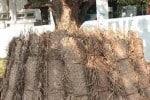 சூடு பிடிக்குது தென்னந்தடுக்கு தொழில்: ஊரடங்கில் இருந்து மெல்ல மீள்கிறது