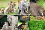 உயிரினங்கள் பாதுகாக்கப்பட வேண்டும்: இன்று சர்வதேச பல்லுயிர் தினம்