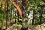 குழாய் பதிக்க மரம் அழிப்பு: அன்னூர் விவசாயிகள் புகார்