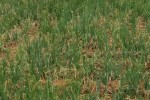 சின்னவெங்காயத்துக்கு நிலையான விலை?  நிர்ணயித்தால் மாறும் விவசாயிகள் நிலை