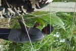 தென்னை மரம் விழுந்து  மின் கம்பங்கள் சேதம்