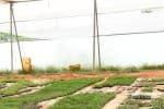 தீவிரம்:  மூன்று லட்சம் கத்திரி, மிளகாய் செடிகள் உற்பத்தி...50 ஆயிரம் சாமந்தி கன்றுகள் விற்பனைக்கு தயார்