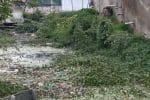 ராஜவாய்க்காலில் பிளாஸ்டிக் கழிவு; இயற்கை ஆர்வலர் கவலை