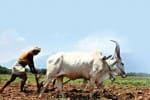 இது உங்கள் இடம்: விவசாயிகளே பலி கடா ஆகாதீர்!