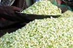 கடும் பனிப்பொழிவால் மல்லிகை விலை ஏற்றம்; கிலோ ரூ.3,500க்கு விற்பனை