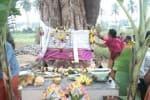 மாப்பிள்ளை அரசு; மணப்பெண் வேம்பு!  சடங்குகளுடன் திருமணம் நடத்திய ஊர் மக்கள்