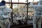 கேரளாவில் தீவிரமாக பரவும் பறவைக் காய்ச்சல்: அரசு எச்சரிக்கை