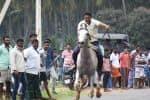 'மாஸ்' காட்டிய மார்வாரி குதிரைகள்! பார்வையாளர்கள் பரவசம்