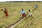 நிவாரணம் :  புயலால் பயிர் பாதிப்பு விவசாயிகளுக்கு...ரூ.15.72 கோடி வங்கி கணக்கில் சேர்ப்பு