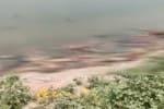கங்கையில் மிதக்கும் சடலங்கள் : டிரெண்டிங்கில் களேபரம்