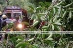 நீலகிரியில் 33. 6 மி. மீ. ,  மழை பதிவு:  6 இடங்களில் மரங்கள் விழுந்தது