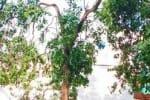 திருப்பூரில் சந்தன மரம் வெட்டி கடத்தல்