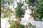 சந்தன மரம் வெட்டி கடத்தல் போலீஸ் விசாரணை