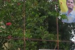 பா.ஜ., பேனர்  கிழிப்பால் பரபரப்பு