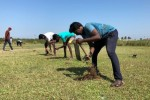 சிறுவேடல் தாங்கல் பகுதியில் 800 பனை விதைகள் நடவு