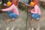 பாம்புகளுக்கு 'ராக்கி' கட்டிய வாலிபர் பலியான பரிதாபம்