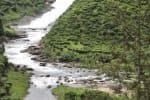 பரம்பிக்குளத்துக்கு நீர் திறப்பு :சோலையாறில் சரியும் மட்டம்