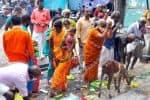 திருத்தணி கோவிலில் கிருத்திகை விழா படியில் பக்தர்கள் வழிபாடு