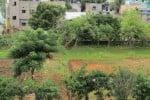 உரக்கிடங்கில் காய்கறி தோட்டம்; அசத்தும் அனகாபுத்தூர் நகராட்சி