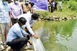 சுய உதவிக்குழுவினர் மூலம் குளங்களில் மீன் வளர்ப்பு: கலெக்டர் நடவடிக்கை
