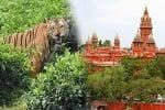 ஐகோர்ட் உத்தரவால் புலியை பிடிப்பதில் 'கிலி ' - வனத்துறை என்ன செய்ய போகுது?