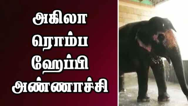 அகிலா ரொம்ப ஹேப்பி அண்ணாச்சி | Elephant Shower Bath | Trichy | Dinamalar