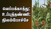 வெப்பக்காத்து ; உப்புத்தண்ணி ; நிலம்போச்சே | Maize, Vegitables Farming | Trichy | Dinamalar