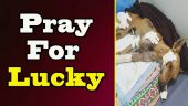 Mumbai prays for Lucky