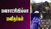 மனசாட்சியில்லா மனிதர்கள்  | Elephant Tikiiri | Esala Perehara Festival | Sri Lanka