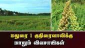 மதுரை 1 குதிரைவாலிக்கு மாறும் விவசாயிகள் | Barnyard Millet | Madurai 1 | Agricultural College | Madurai | Dinamalar