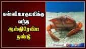 கன்னியாகுமரிக்கு வந்த ஆஸ்திரேலிய நண்டு | Australia Crab | Kanyakumari | Dinamalar |