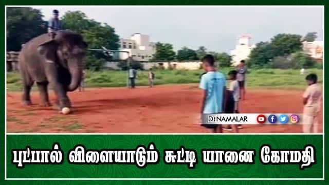 புட்பால் விளையாடும் சுட்டி யானை கோமதி | Elephant Gomati playing football