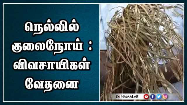நெல்லில் குலைநோய் : விவசாயிகள் வேதனை