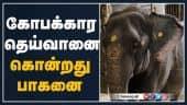 Tamil Celebrity Videos மற்றொரு பாகன் தப்பியது எப்படி?