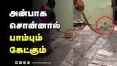 அன்பாக சொன்னால்  பாம்பும்  கேட்கும் | Snake | Dinamalar Video