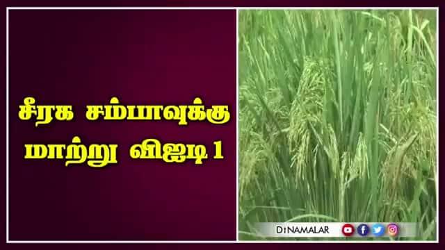 சீரக சம்பாவுக்கு மாற்று விஐடி1