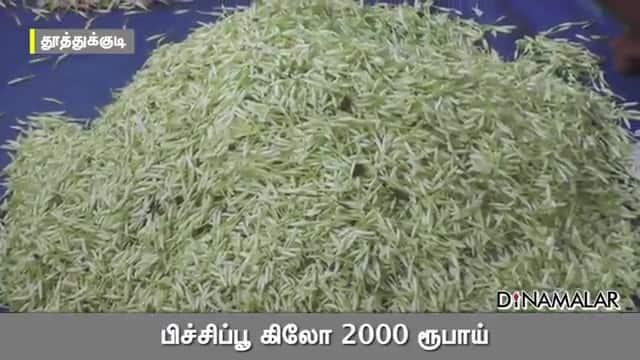பிச்சிப்பூ கிலோ 2000 ரூபாய்