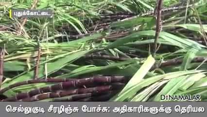 செல்லுகுடி சீரழிஞ்சு போச்சு: அதிகாரிகளுக்கு தெரியல