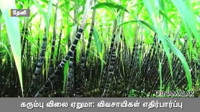 கரும்பு விலை ஏறுமா: விவசாயிகள் எதிர்பார்ப்பு