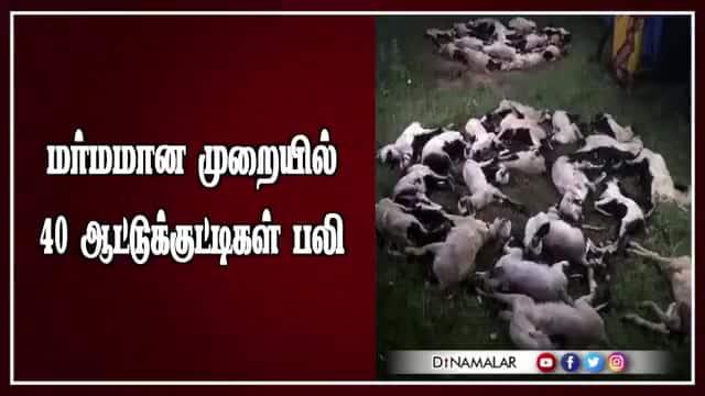 மர்மமான முறையில் 40 ஆட்டுக்குட்டிகள் பலி