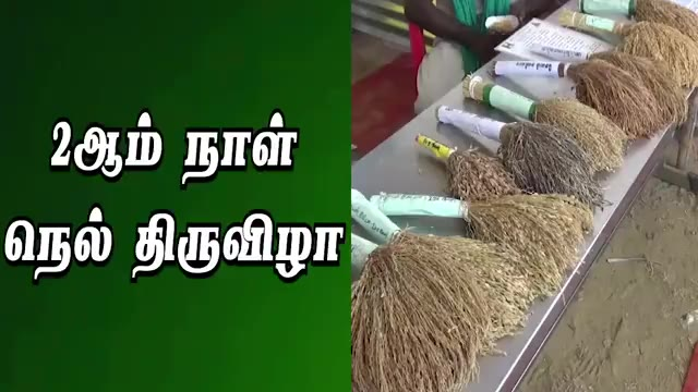 2ஆம் நாள் நெல் திருவிழா