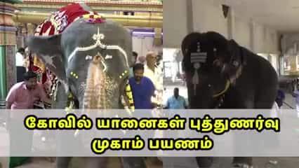 கோவில் யானைகள் புத்துணர்வு முகாம் பயணம்